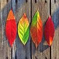 leaf120